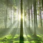 blog-Es-ist-nachhaltig